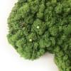 PIN POINTS - koraalrood voor de mos wereldkaart